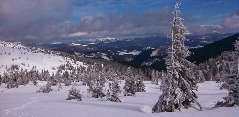 Как выбирать сноуборд для фрирайда